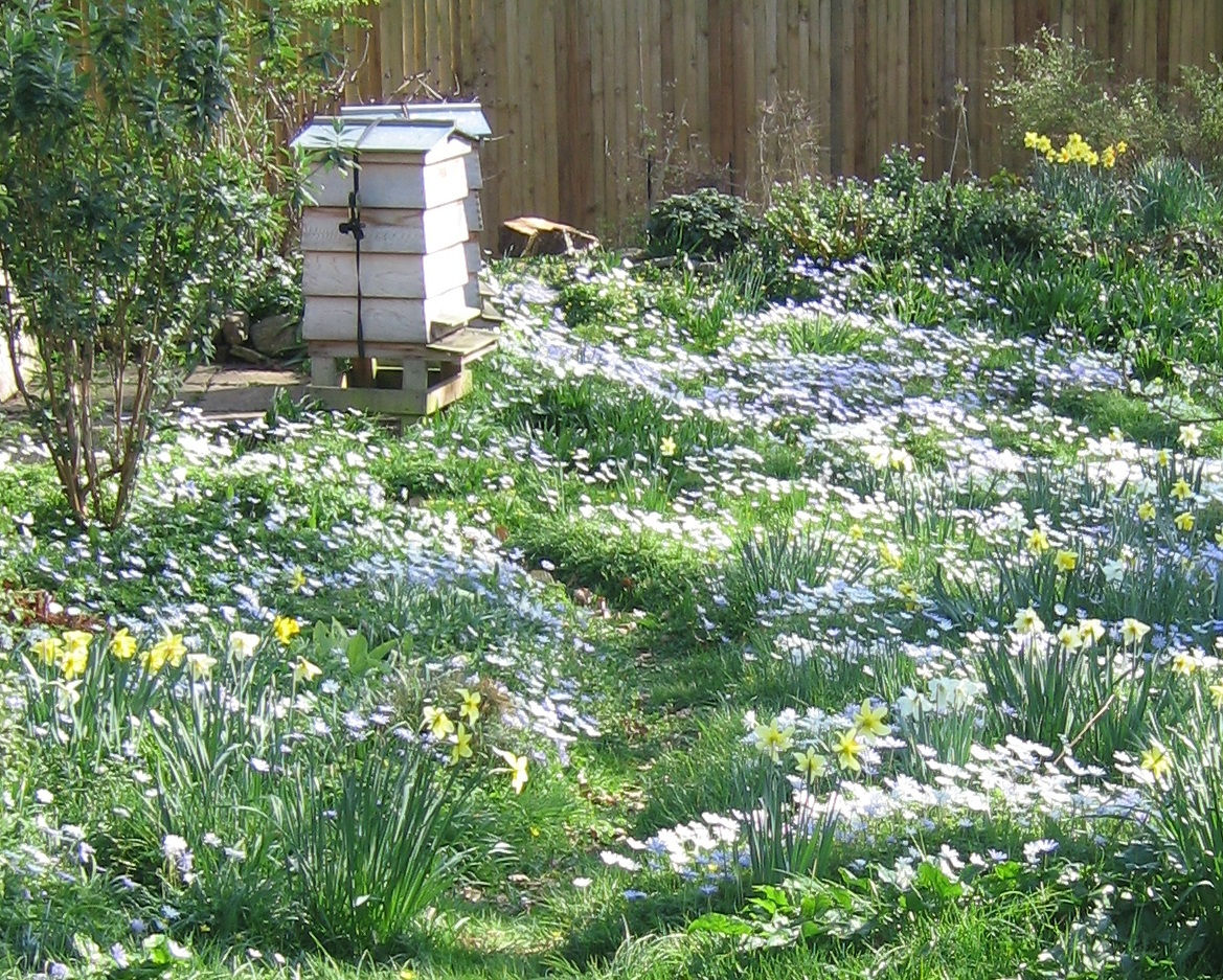 Hives in Spring
